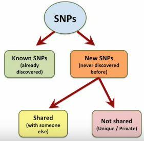 Maurice SNP Types
